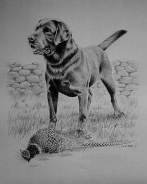 Graphite drawng commission of Labrador dog